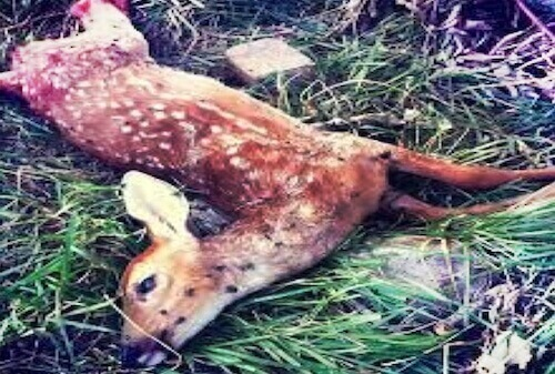 madison nj dead animal carcass pickup disposal service