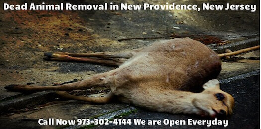 new providence nj dead animal carcass pickup services