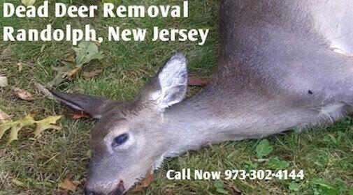randolph nj dead deer carcass pickup disposal services