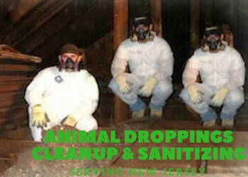 animal droppings clean up nj - technicians cleaning up animal droppings nj