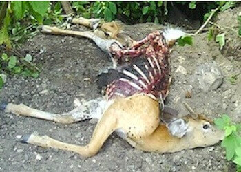 dead animal carcass NJ - dead deer disposal new jersey
