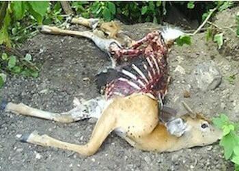 dead animal carcass NJ - dead deer disposal new jersey