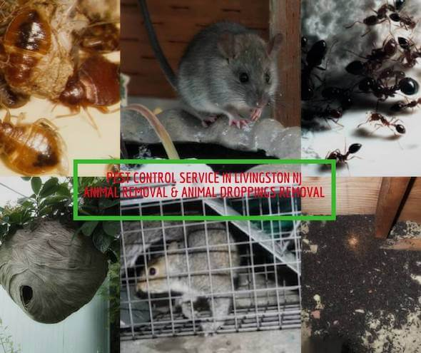 pest control exterminator livingston nj - best pest control  exterminators livingston nj