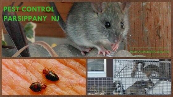 pest control exterminator service parsippany nj