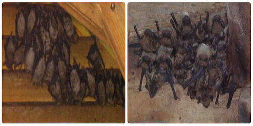 new jersey bat extermination service