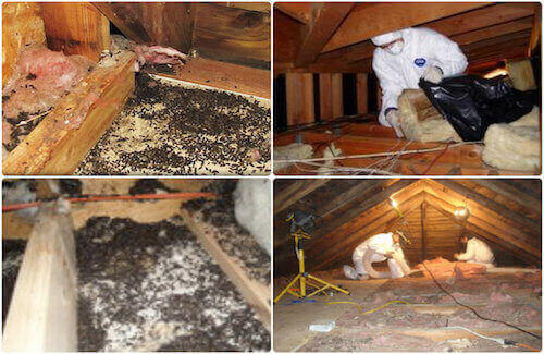 animal droppings cleanup service staten island, ny