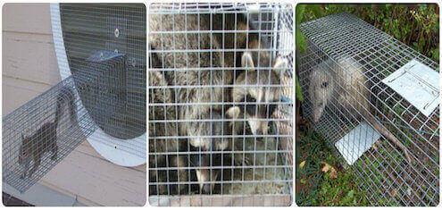wildlife animal removal service staten island, ny