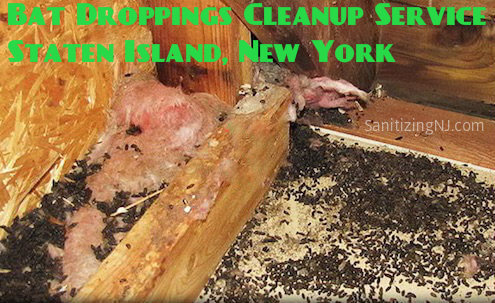 bat guano droppings cleanup service staten island ny