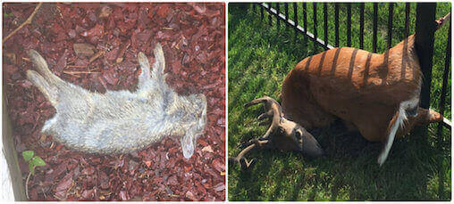 dead animal carcass removal pickup disposal elmont, ny