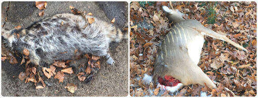 Long Beach, NY: Dead Animal Carcass Removal, Disposal ...