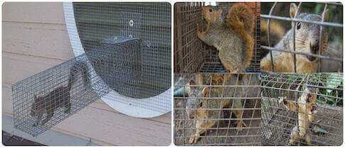 squirrel control squirrels extermination service staten island, ny
