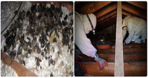 animal droppings feces cleanup biohazard service nassau county ny, long island new york
