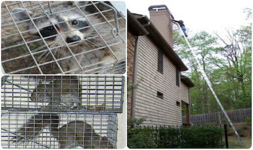 animal removal wildlife proofing service nassau county, long island new york