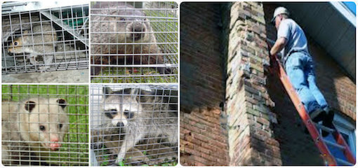 animal removal proofing wildlife exclusion service freeport, ny