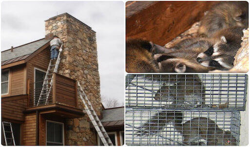 wildlife removal and proofing service suffolk county, long island, new york