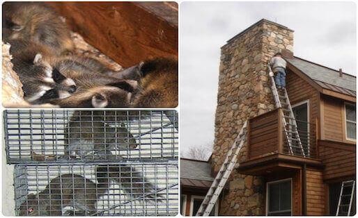 wildlife removal & animal proofing service north hempstead, ny