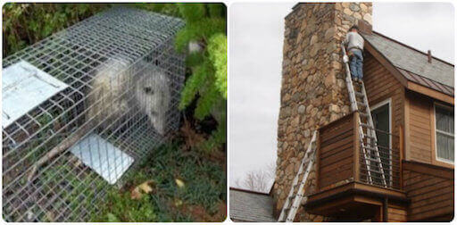 wildlife removal and animal proofing service oyster bay, ny
