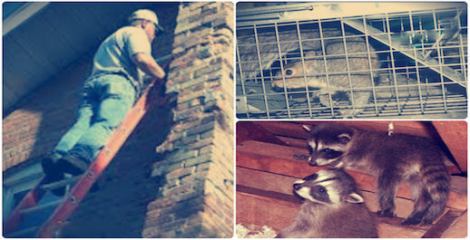 animal removal trapping proofing service rockville centre, ny