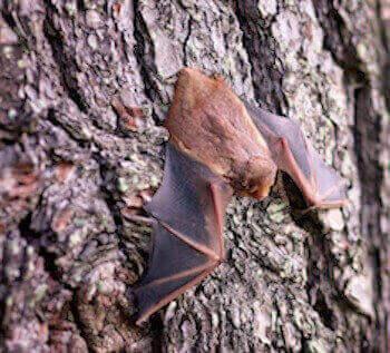 animal removal los angeles ca - bat removal los angeles