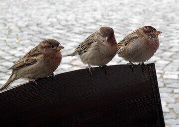 los angles wildlife removal - bird removal los angeles