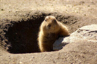 animal removal los angeles - groundhog removal los angeles ca