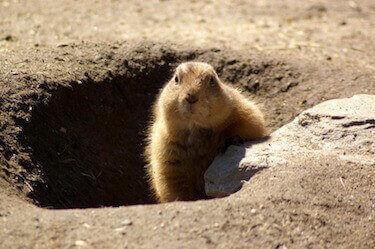 animal removal los angeles - groundhog removal los angeles ca