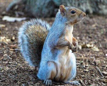 animal removal los angeles - squirrel removal los angeles ca