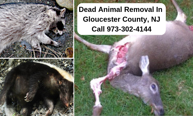 Gloucester County NJ dead animal deer removal disposal