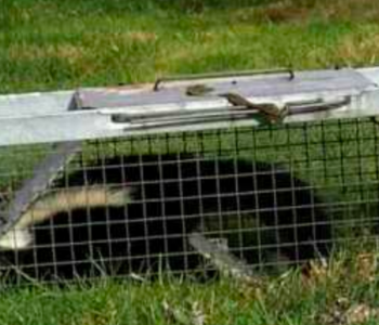 New Jersey trapping skunks removal services in NJ