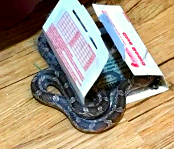 NJ trapping snakes removal services in NJ