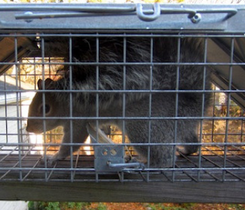 New Jersey trapping squirrels services in NJ