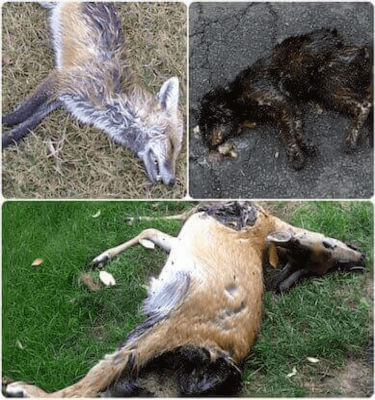 cranford nj dead animal deer carcass removal
