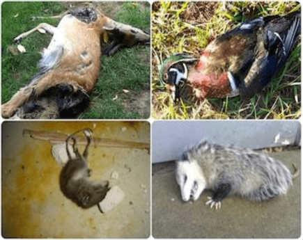 Edison NJ dead animal deer carcass removal