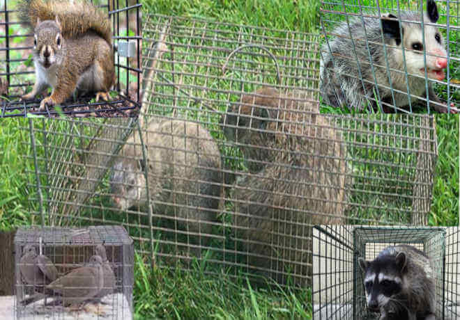 ocean county nj animal trapping, wildlife removal and proofing in Ocean County